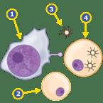 NK Cell Meets Virus